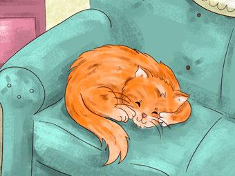 A cat named Zeek